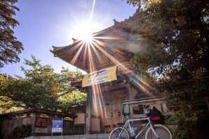 Explore the main sights of Golden Gate Park like the Japanese Tea Garden